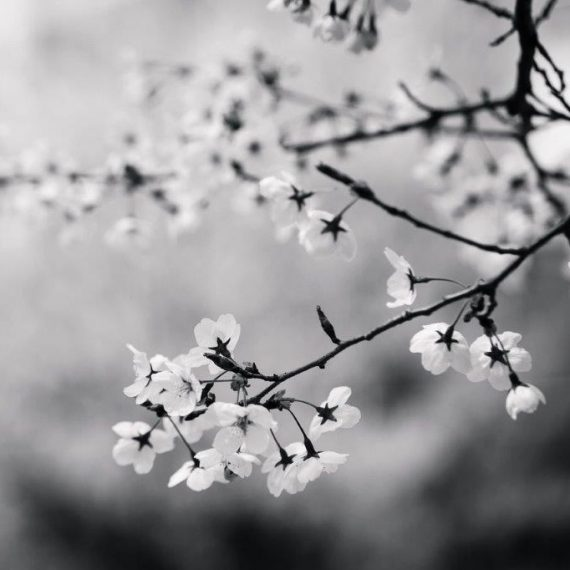 florystyka_zalobna